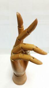 Modello mano destra in legno naturale